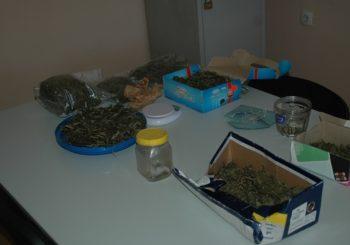 Gradiška: Mladići osumnjičeni za proizvodnju i prodaju marihuane