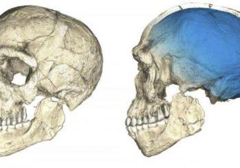 Pronađen fosil čovjeka star 300.000 godina