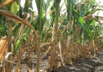 Ministarstvo poljoprivrede: U Srpskoj izvjesno stanje elementarne nepogode