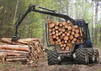 Šinik: Izvoz proizvoda od drveta veći za oko 15 odsto