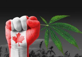 U Kanadi uskoro legalizacija kanabisa, mogli bi zaraditi milijarde