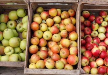 Rusi obustavili uvoz jabuka iz BiH