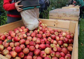 """""""Frukt kompani"""" tvrdi da su izvozili jabuke proizvedene u BiH"""