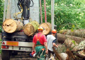 Proizvodnja šumskih sortimenata manja za 10 odsto