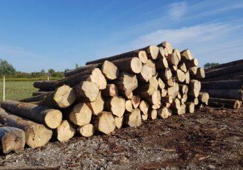 USAGLAŠENO Vlade FBiH i RS zabraniće izvoz drvnih sortimenata iz BiH na dvije godine