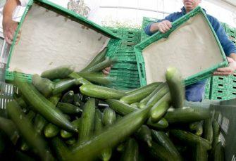 ZBOG PESTICIDA: Inspekcija RS zabranila uvoz 20 tona krastavaca iz Srbije