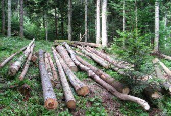 OGLUŠILI SE O POZIV VIŠKOVIĆA: Direktorima šumarija ostavka ne pada na pamet