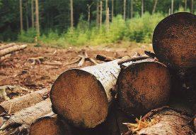 PAO SA LITICE: Muškarac (33) iz Teslića poginuo tokom sječe drveta