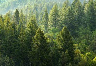 Integralni informacioni sistem za bolju kontrolu i zaštitu šuma