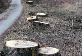 ŠUME RS: Šteta zbog bespravne sječe 1,45 miliona KM