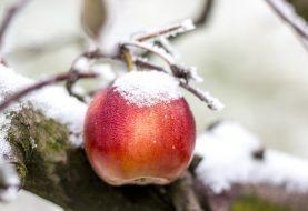 VOĆARI ZABRINUTI: Loši vremenski uslovi bi se mogli odraziti na kvalitet ploda