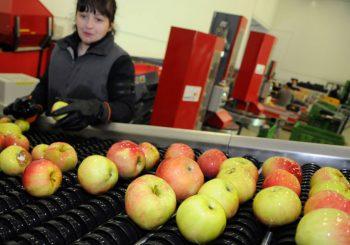 ANALIZA: Porastao izvoz voća, povrća, mlijeka i ljekovitog bilja iz BiH